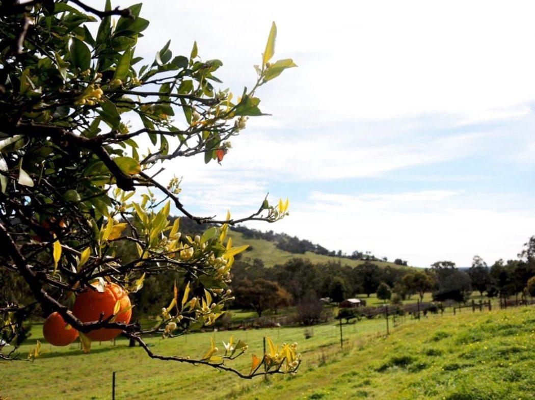Sbírání ovoce práce na farmách