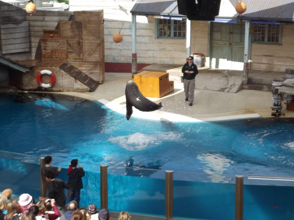 taronga zoo sydney tulení přehlídka