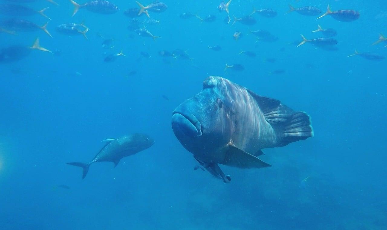 Whitsundays-podmořský svět