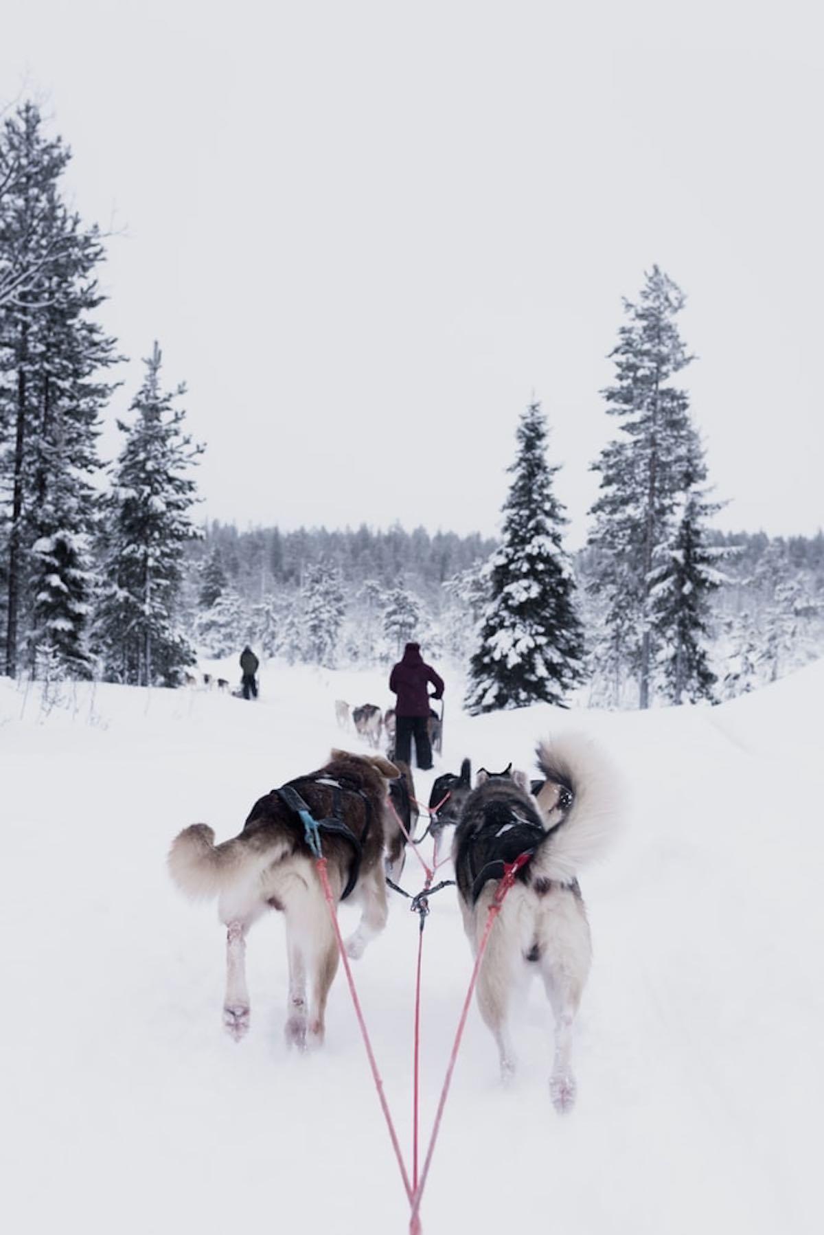psí spřežení